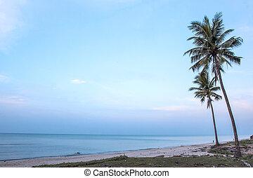 palma, coco, playa, árbol, arenoso