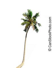 palma de coco, árboles, aislado, blanco, fondo., included, recorte, path.