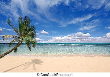 palma, encima, ondas, árbol, océano