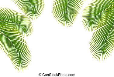 palma, fondo., foglie, albero, bianco