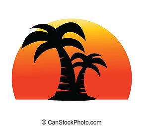 palma, imagen, árbol