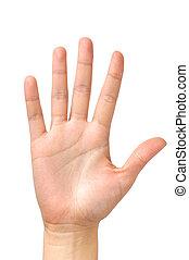 palma, isolado, mão feminina