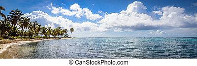 palma, oceano, cielo, caraibico, costa, repubblica...