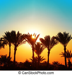 palma, pôr do sol, bonito, árvores
