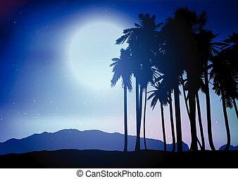 palma, paesaggio, notte