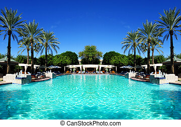 palma, piscina, árboles, natación