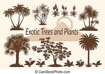 palma, silhouette, erba, albero, fiori