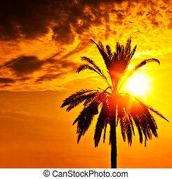 palma, silhouette, sopra, tramonto