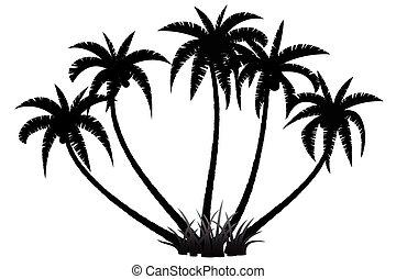 palma, silueta, árvores