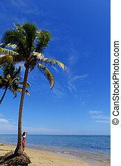 palma, su, uno, spiaggia, vanua, levu, isola, figi