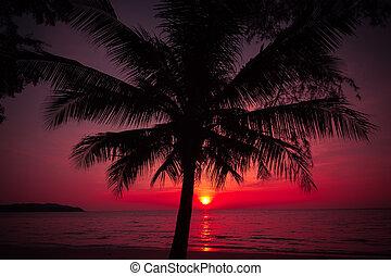 palma, tramonto, tropicale, albero, spiaggia., silhouette