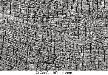 palma, tronco, fondo, struttura