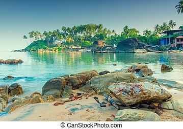 palmas coco, manhã, iluminado, sun., tinted., praia