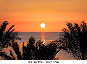 palmas, e, amanhecer, sobre, mar