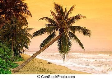 palmas, en, trópico, isla