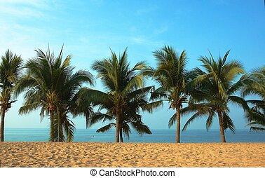 palmas, ocean.