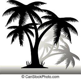 palmas, silueta, três, fundo, pretas, sombra, branca