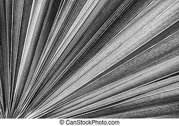 palmblad, struktur