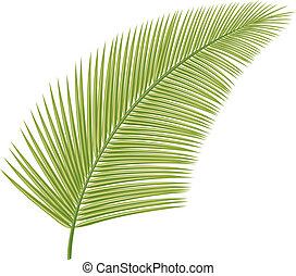 palmblatt, (leaf, von, handfläche, tree)