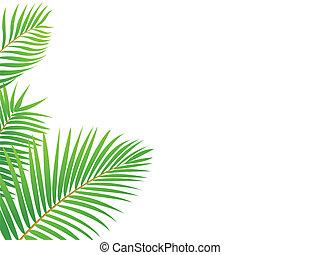 palmboom, frame, achtergrond