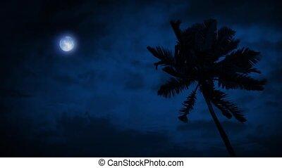 palmboom, in, bries, met, maan, boven