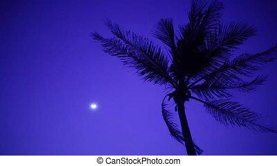palmboom, in, bries, met, maan, op de avond