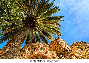 palmboom, tegen, een, blauwe hemel