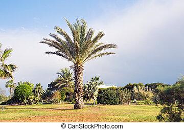 palme, hintergrund, in, der, himmelsgewölbe