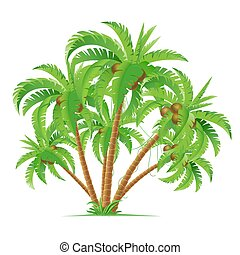palme noce cocco