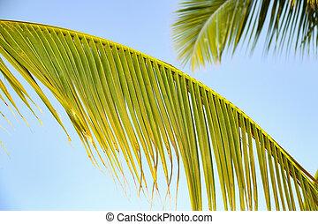 Palme on a background of the blue sky