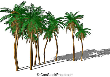 palme, shadow.