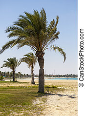 palmen, auf, a, sandstrand