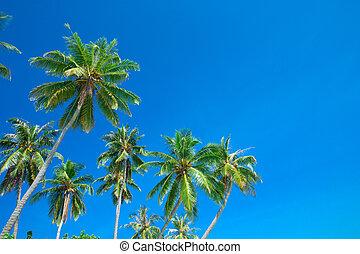 palmen, auf, der, hintergrund