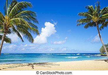 palmen, auf, der, sandiger strand, in, hawaii