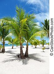 palmen, auf, paradies insel