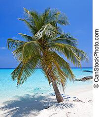 palmen, auf, trauminsel
