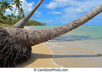 palmen, auf, tropischer strand, mit, kristall, wasser, und, weißer sand