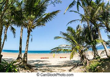 palmen, blauer himmel