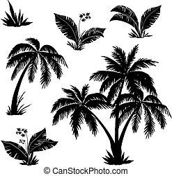 palmen, blumen, und, gras, silhouetten