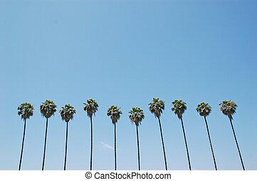palmen, reihe