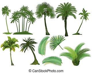 Palm.eps