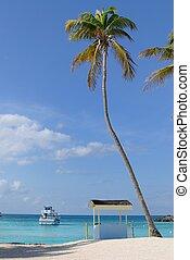palmera, en, el, bahamas
