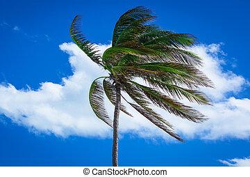 palmera, en, un, fuerte, viento