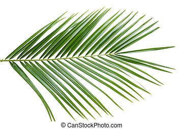 palmera, hoja