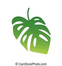 palmera, hoja, monstera, planta tropical