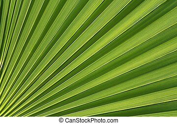 Palmetto Abstract - A Close-up of a Washington Palm Reveals...