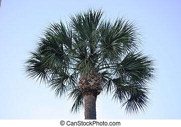 palmetto boom