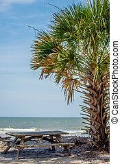palmetto, eiland, strand, bos, jacht