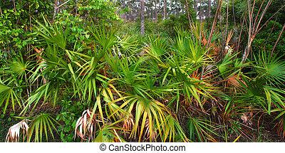 palmetto, everglades, understory, -