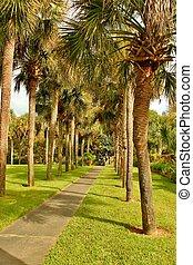 Palmetto palms 2 - Palmetto palms growing in Brookgreen ...